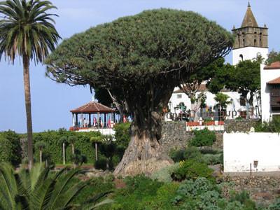 La leyenda del Drago milenario de Canarias