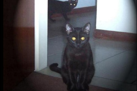 Gatos negros, mitos y supersticiones
