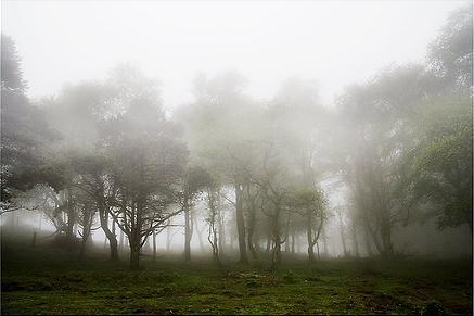 Xuan de la Borrina, pastor de la niebla