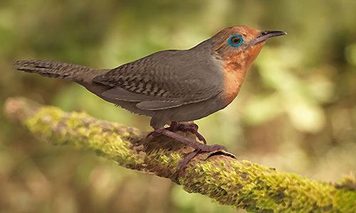 El canto del Uirapuru, el mas hermoso
