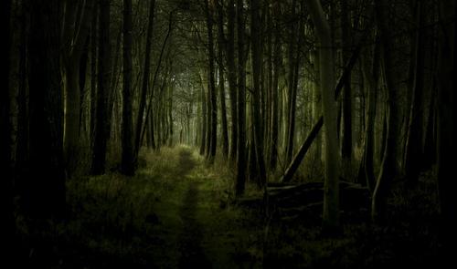 Bosque anocheciendo