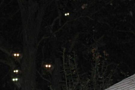 Gaueko, el señor de la noche