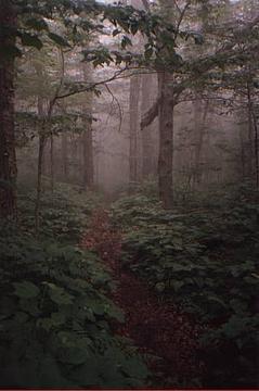 Senda forestal en Glastenbury