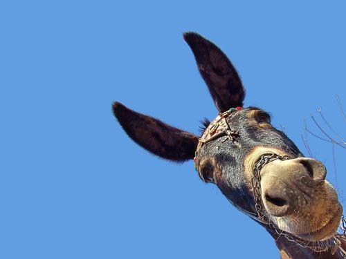 Las orejas de burro del rey Midas