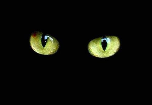 Gato fantasma