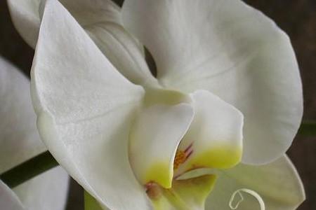 El nacimiento de la Flor del Aire en Mendoza