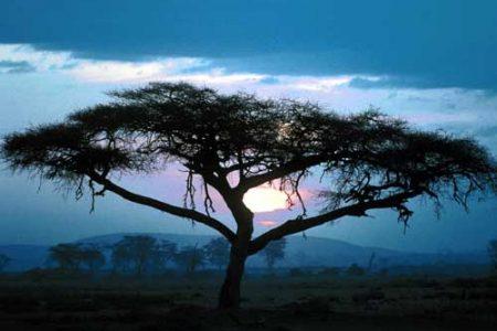 El espíritu del árbol, leyenda de África