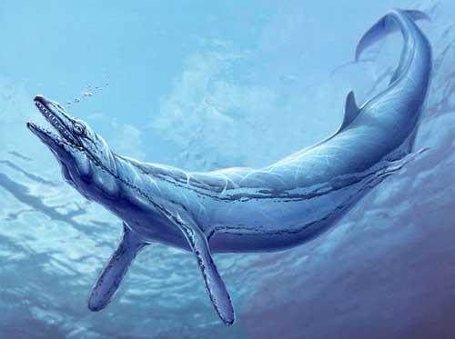 Cetoides Basilosaurus