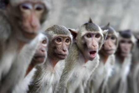 El castigo de los monos, leyenda de África