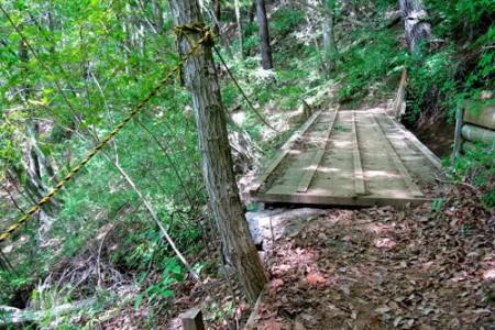 Aokigahara, el bosque de los suicidios