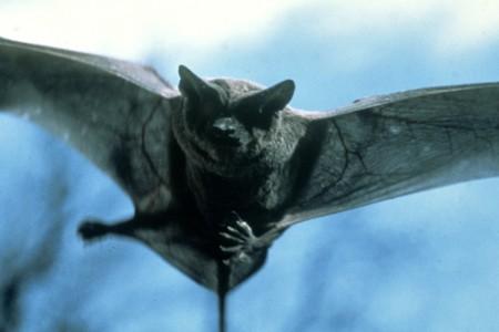 El murciélago de colores, leyenda mexicana